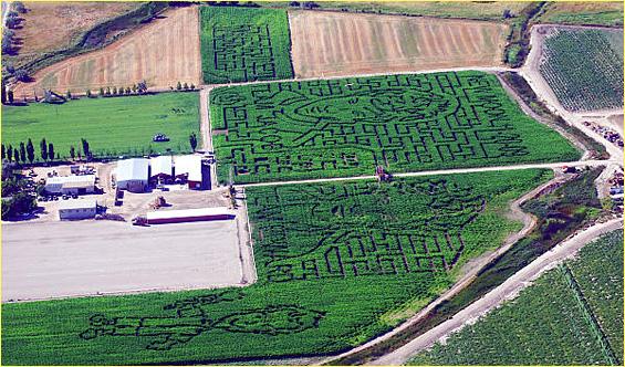 Black Island Farm New Moon Corn Maze